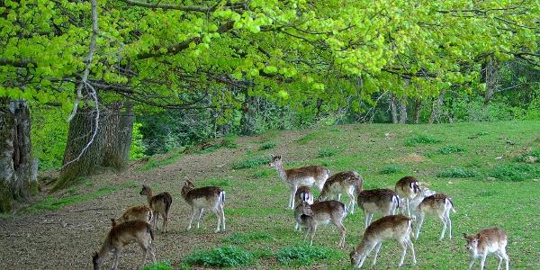 Wildpark Peter und Paul, St. Gallen.