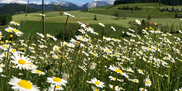 Rund um Stiefenhofen bietet herrliche Aussichten auf Oberstaufen