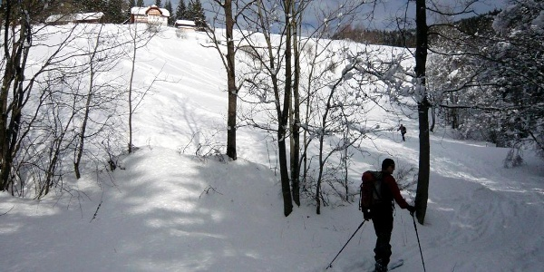 Stuhleck-Rettenegg: Austritt aus dem Waldgraben auf die Zwieselbauerwiesen