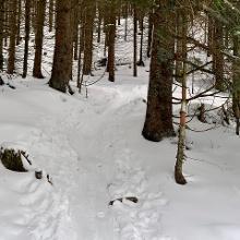 Im steilen Wald kurz nach dem Lyragraben