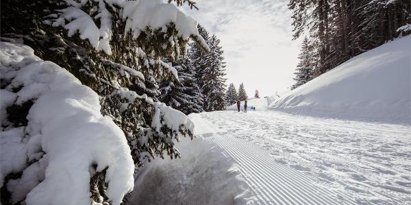 Winterwandern auf Meran 2000