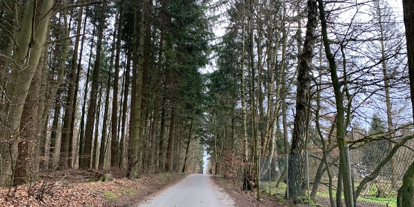 הדרך המובילה לעצים