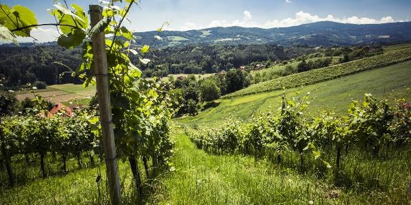 Weingärten Hochgrail