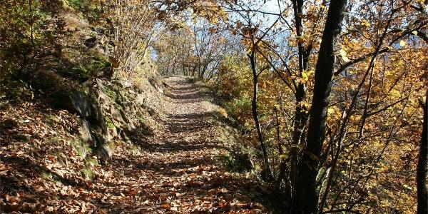 Terrainkurweg 5 -  Partschins - Sonnenberger Panoramaweg - Naturns