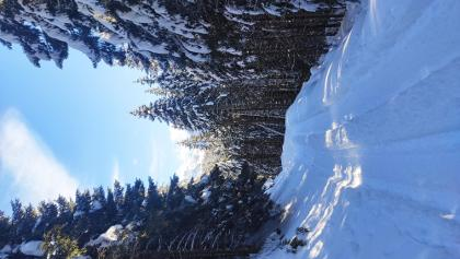 Strada forestale