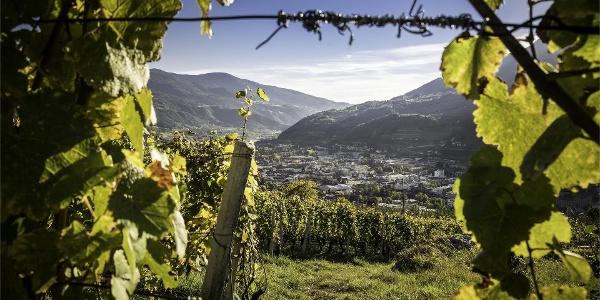 Sentiero del vino e delle melle in valle isarco