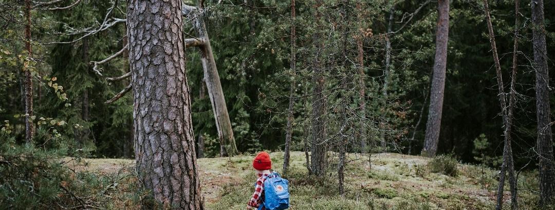 Lapsi metsäpolulla