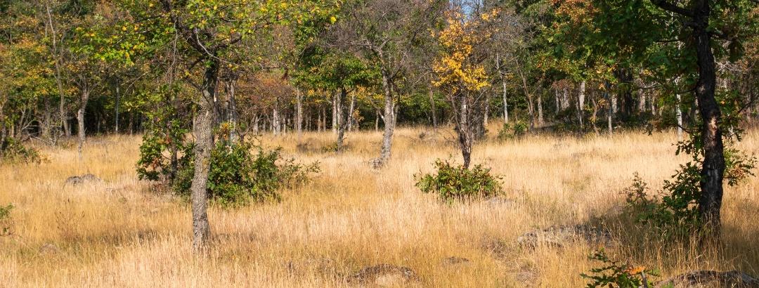 Egykori legelő a Juhász-köves oldalában