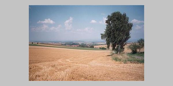 Weizenfelder in der Goldenen Mark