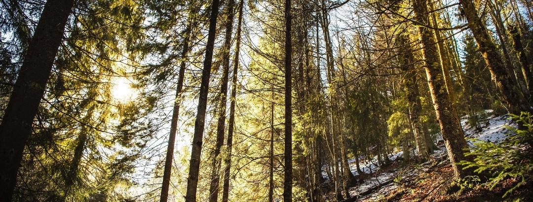 Pădure în Bihor