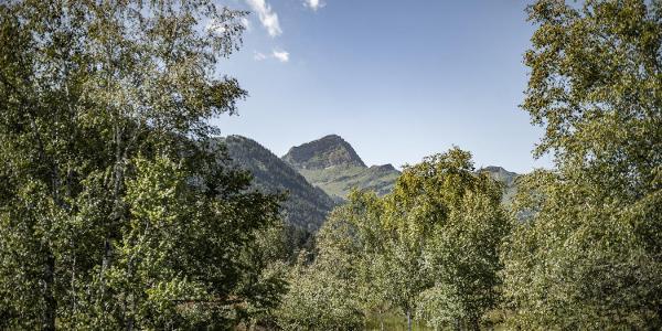 Auf diesem Rundweg tut sich ein herrlicher Blick auf den majestätischen Speer auf, den höchsten Nagelfluhberg Europas.