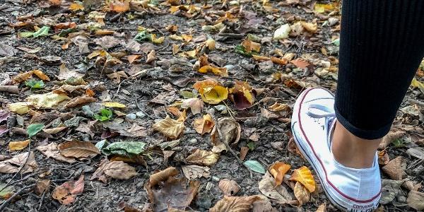 Spaziergang im Pannonischen Herbst