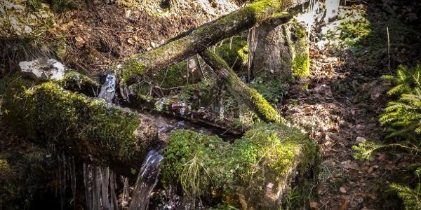 Wasserlauf im Vessertal