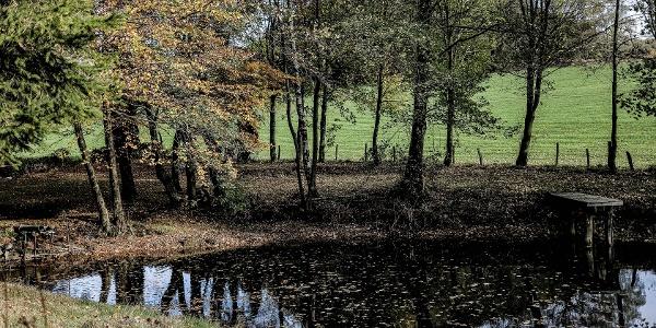 Verträumt wirkender Teich am Wegesrand