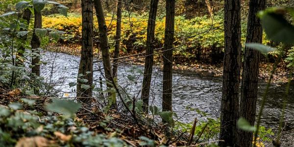 Auch nah am Wasser entlang führt der Themenweg