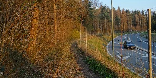 0100 Bei der Autobahnausfahrt Zürich-Wollishofen starte ich in den Single hinein