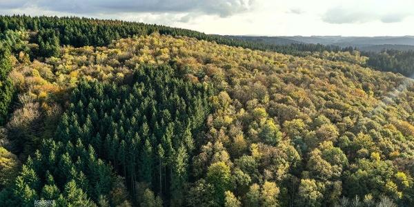 Der Sauerländer Wald ist Thema dieses Wanderweges
