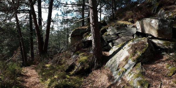 Circuit n°4 - Sentier MBF-ONF en forêt de Fontainebleau