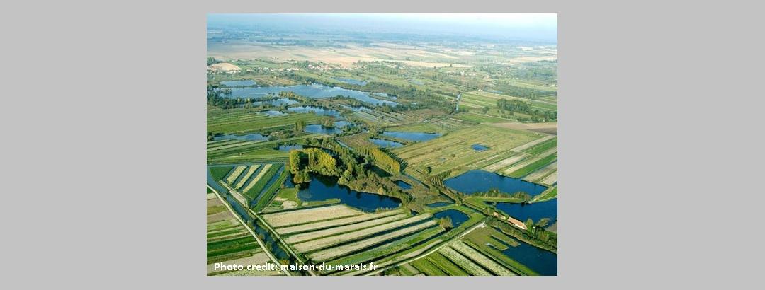 Le marais de Saint-Omer
