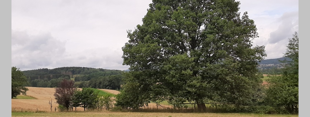 Landschaft St.Wendeler Land