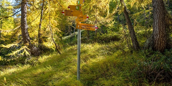 Wegweiser Richtung Furggubäumlicka