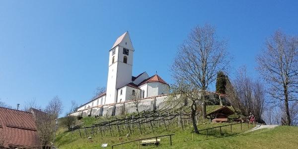 Weinberg und Kirche in Leupolz