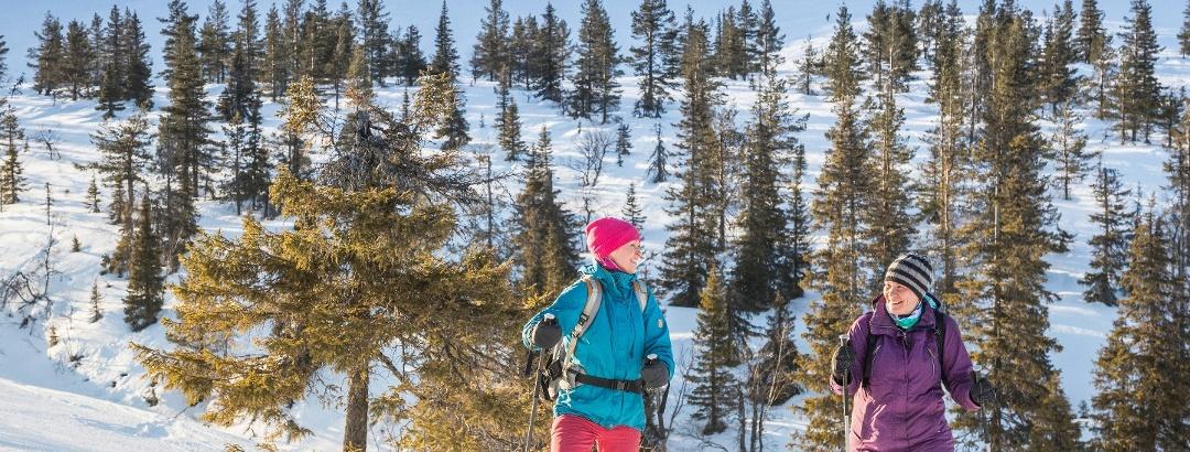 Lumikenkäilijöitä Tuomikurun talvipolulla Pallas-Yllästunturin kansallispuistossa