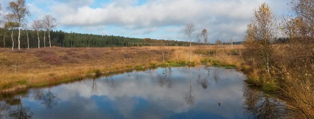 Hochmoor Mecklenbruch im Forstamt Neuhaus