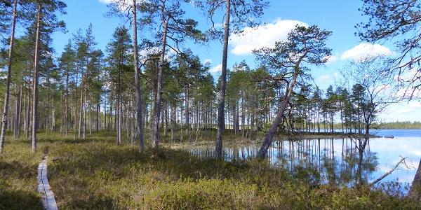 16 lähteen Valkeisjärven rengasreitti, Lestijärvi
