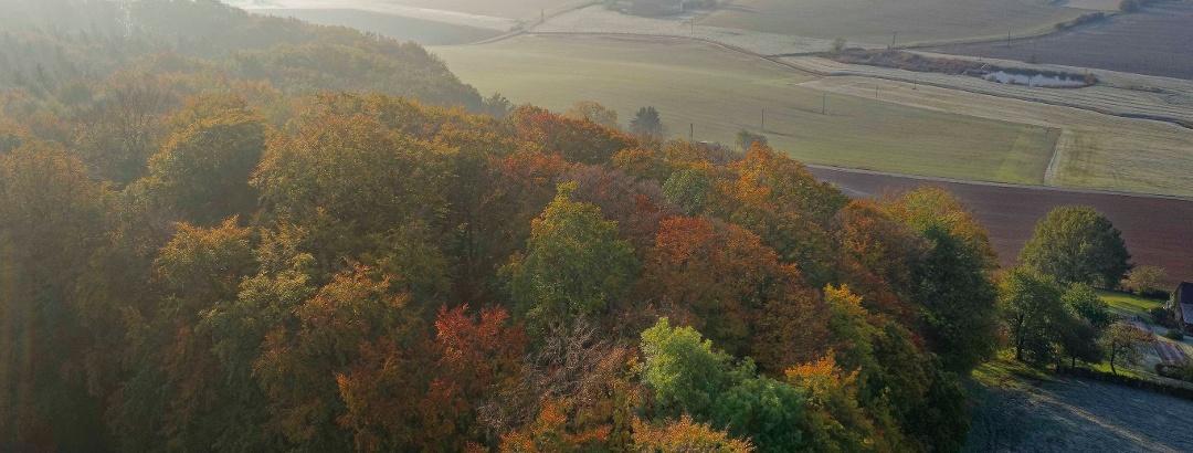 Herbstlicher Farbenrausch im Holter Berg