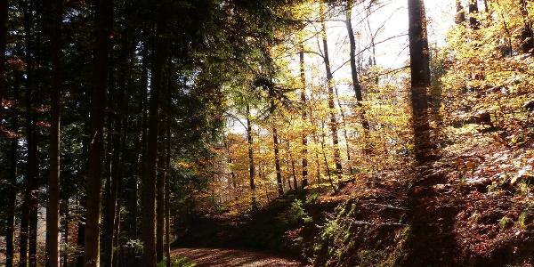 Herbststimmung am Hochlauen