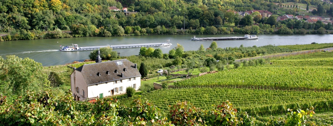 Le vignoble de Moselle