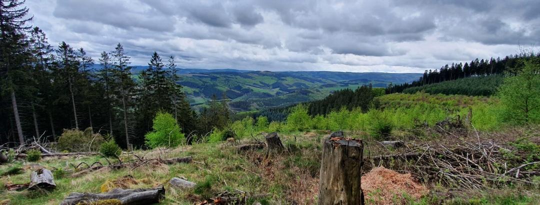 Aussicht vom Bastenberg