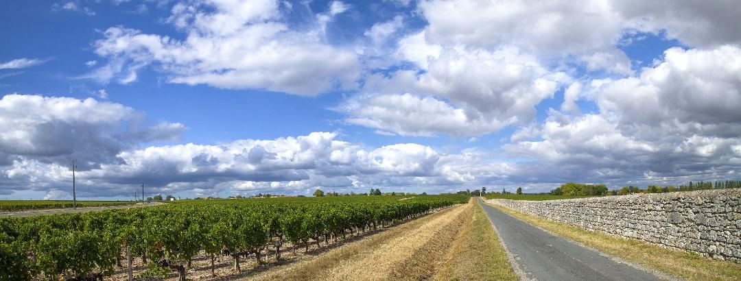 Sur les routes des vignobles, près de Margaux