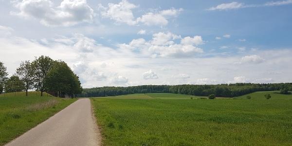 "Der erste Buckel führt den ""Fuchsehöller Weg"" hinauf"