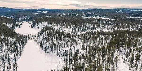 Äkässaivo ja ympäröivää metsää kevätauringossa