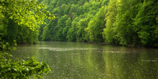 Zápor a Hámori-tavon, a tavaszi erdő harsány zöld tükörképével