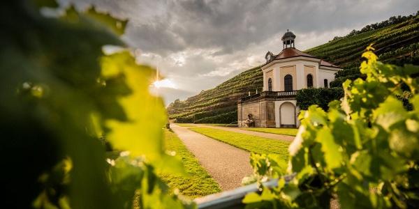 Weinsicht 2012