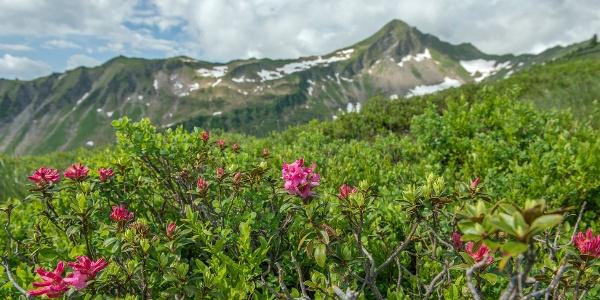 Blumen-Wander-Lehrpfad