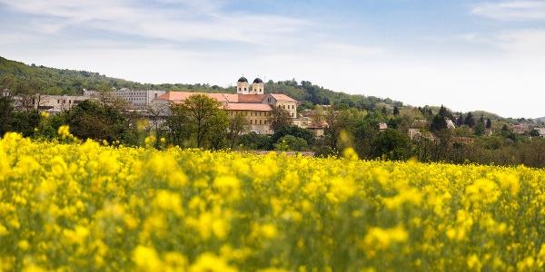 A Márianosztrai bazilika és kolostor a virágzó repceföld mögött