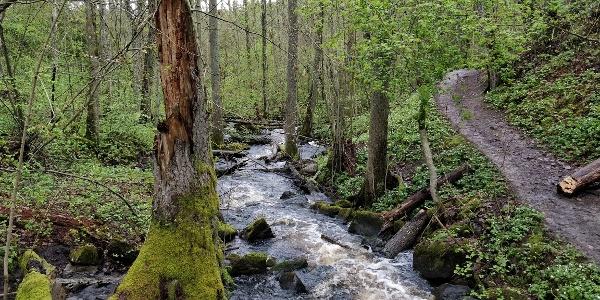Totin luontopolku Teijon kansallispuistossa on hieno kohde
