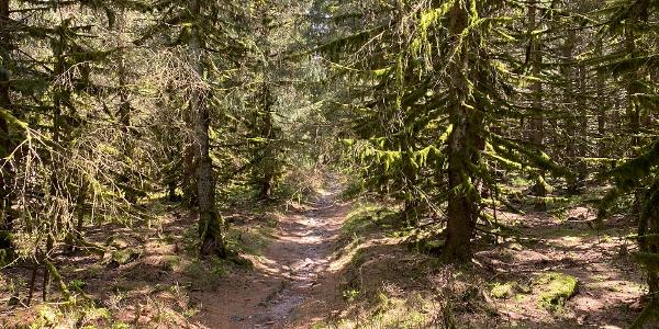 Der Nasse Weg