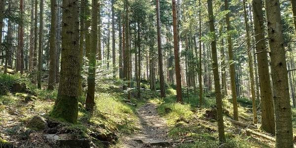 Der Pfad durch den lichten Wald ist traumhaft schön