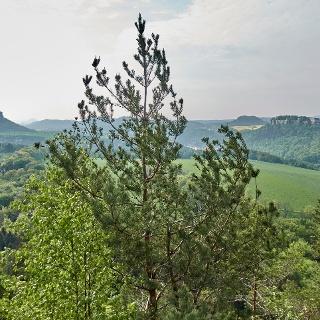Blick vom Kleinen Bärenstein zu Lilienstein, Pfaffenstein und Festung Königstein