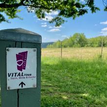 Vitaltour Stein, Wein und Farbe