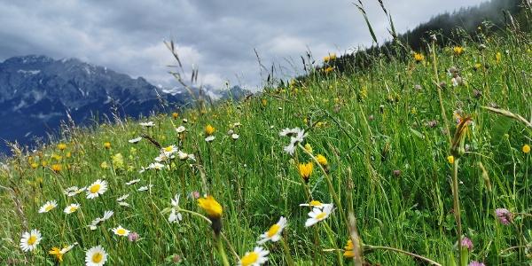 Blumenwiese kurz nach dem Start