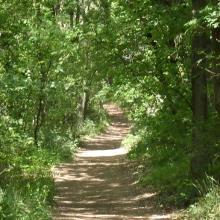 Einer der vielen halbschattigen Waldwege