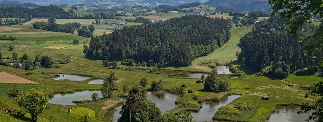 Blick auf die Weiherlandschaft Ostergau
