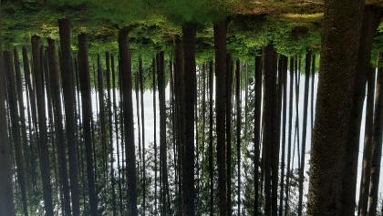 Wunderschöner Wald 31. Mai 2020 leider dreht dieses Programm die Fotos