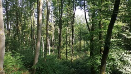Wald - sehr viel Wald